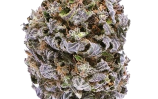 CBD Wholsale flower