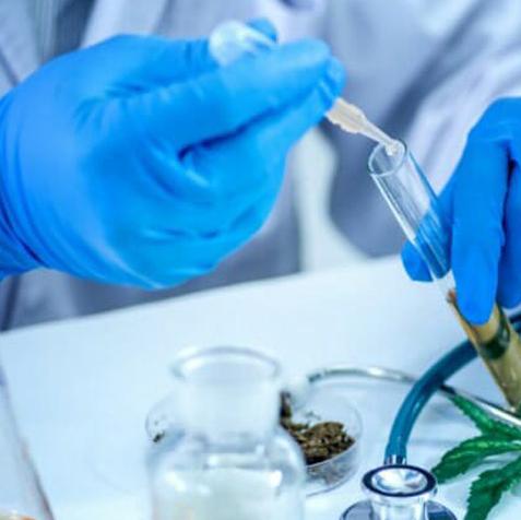 Cannabis Lab Tested Flower Bud